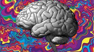 Cosa succede nel cervello quando si assumono sostanze psichedeliche?