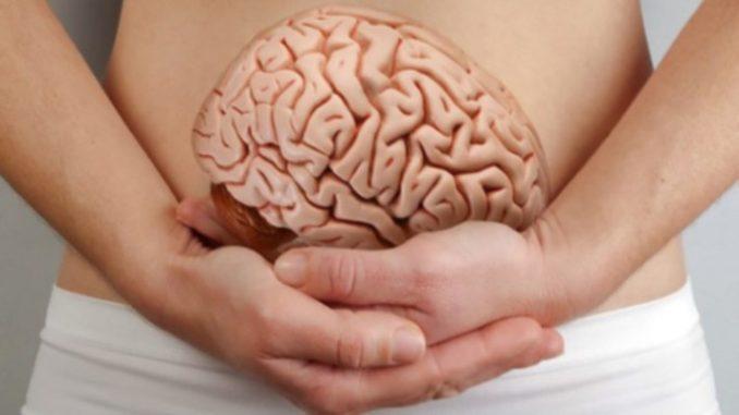 Intestino: interazione con il cervello e funzionalità