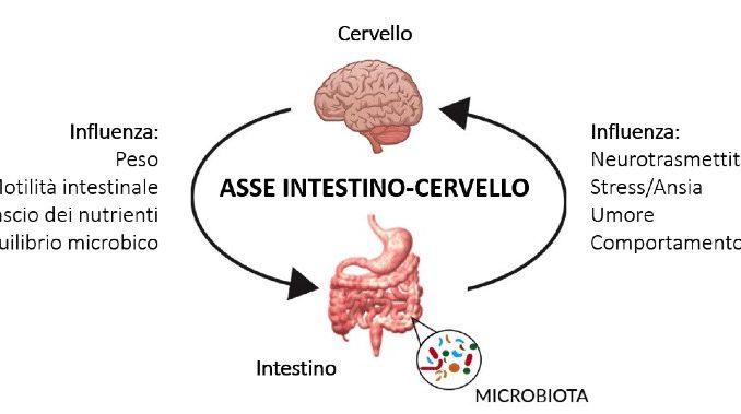 Interazione Cervello e intestino