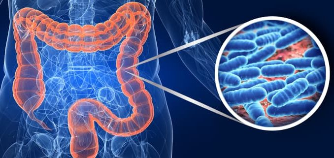 Come funziona la flora batterica intestinale