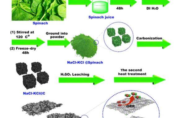 Un team di chimici americani ha messo gli spinaci nelle batterie