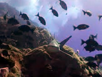 Dorsale di Nazca, si apre un mondo nuovo nel Pacifico del sud