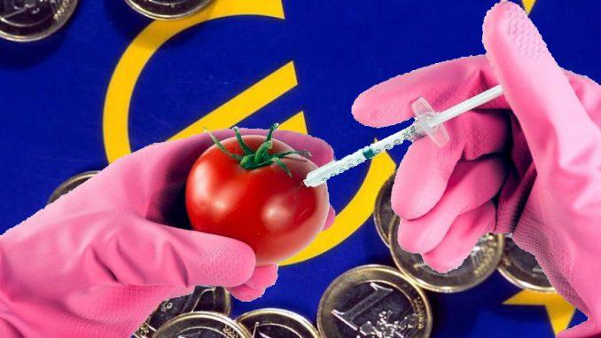 La Commissione Europea autorizza l'uso dei nuovi Ogm