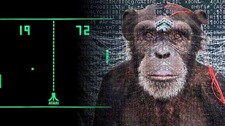 Pager, la scimmia interconnessa con impianto neurale