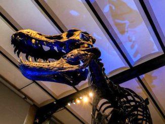 Trovati resti di gigantesco dinosauro carnivoro in Patagonia