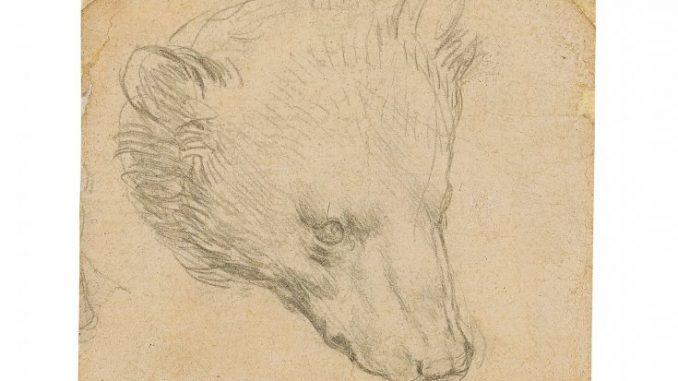 Leonardo da Vinci, Testa di un orso(reuters)