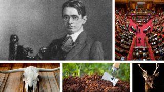 Coltivare con l'abracadabra. Soldi pubblici sull'agricoltura biodinamica