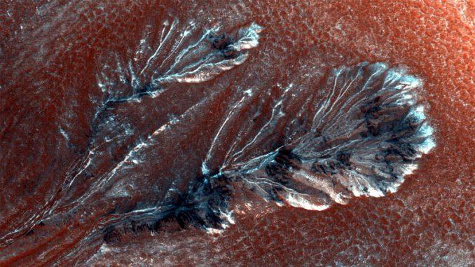 Funghi neri nelle foto dello scongelamento CO2 su Marte