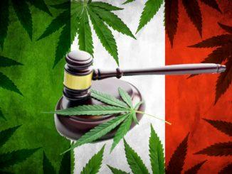 Quattro piante di cannabis per uso terapeutico